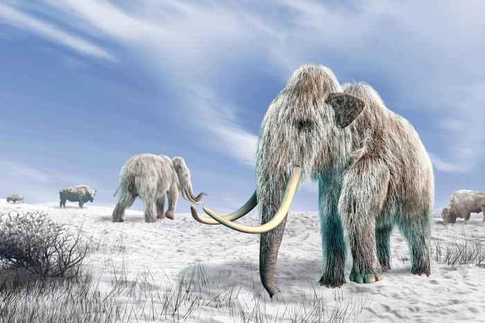 mamuts de la Isla de Wrangel