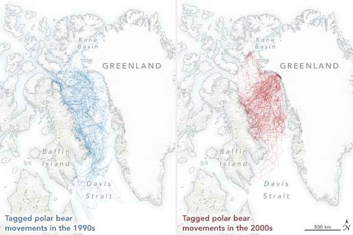 movimiento de osos polares 1990-2000