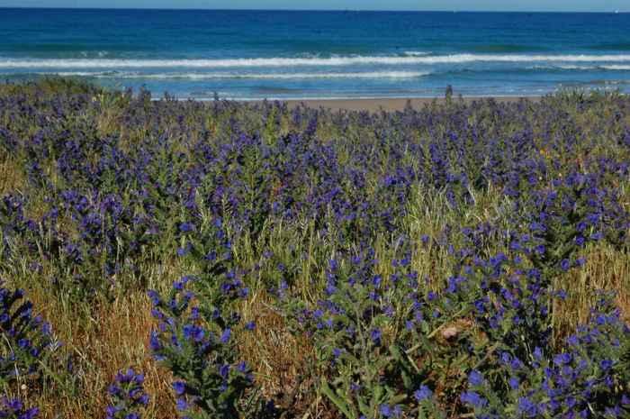 plantas costeras