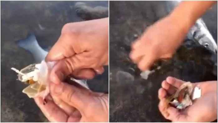 plásticos en el estómago de un pez