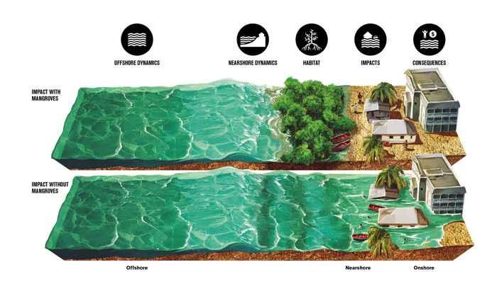 protección de manglares