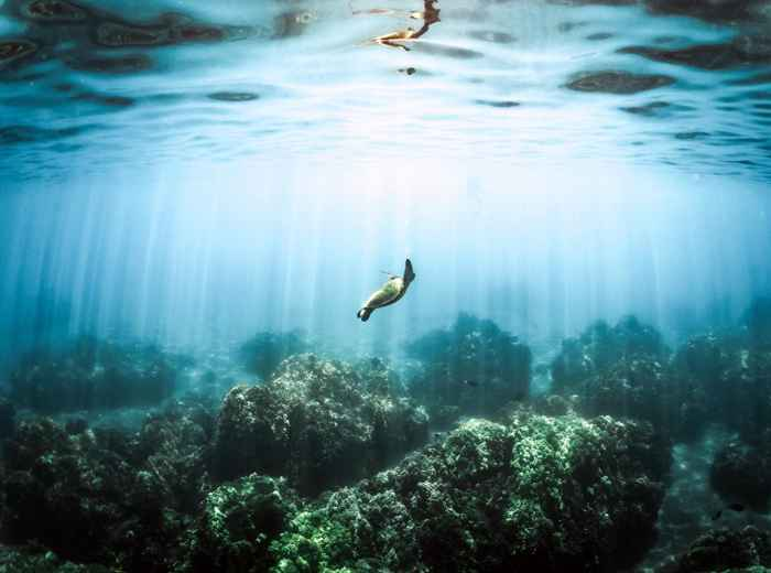 salvar los océanos