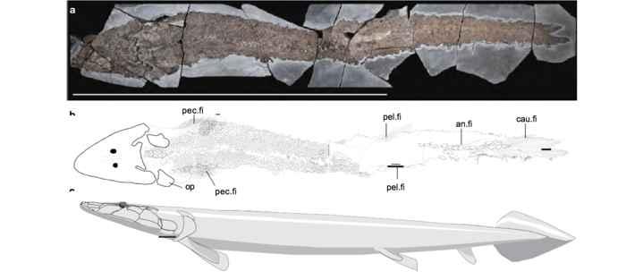 Elpistostege fósil
