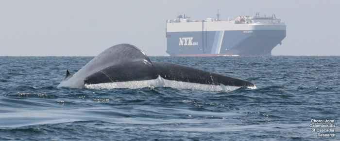 barco y ballena