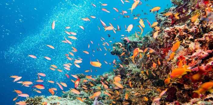 biodiversidad en un área marina protegida