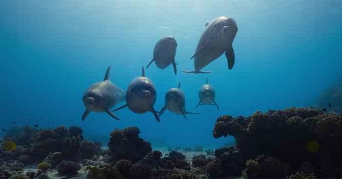 superpoderes de los delfines