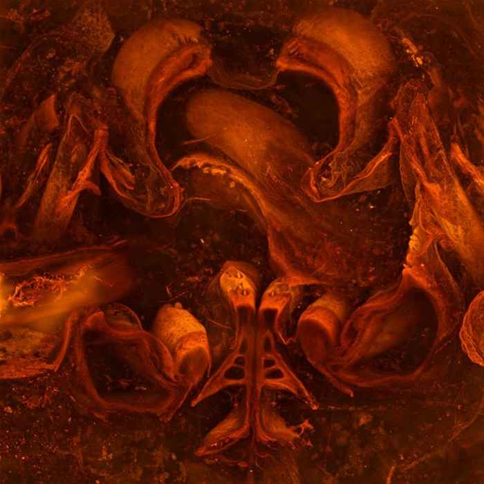 fósil de miriápodo