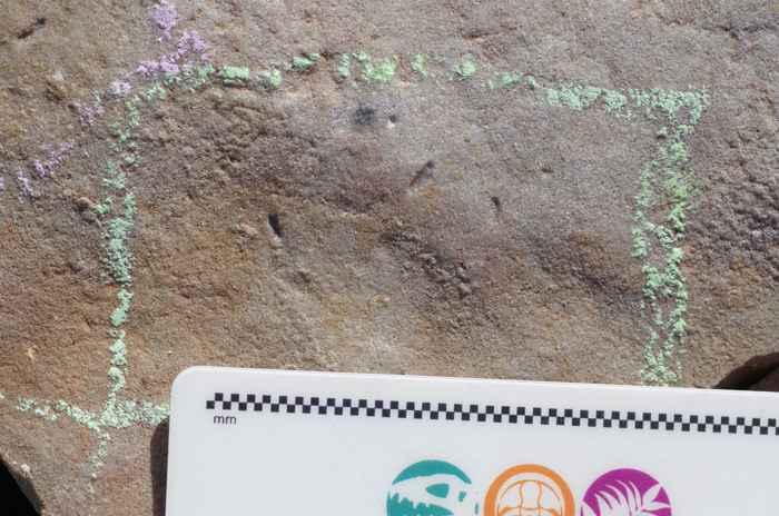 madrigueras de Ikaria wariootia