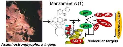 manzamina A