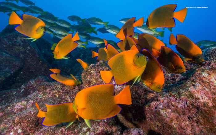 recuperación de la vida marina