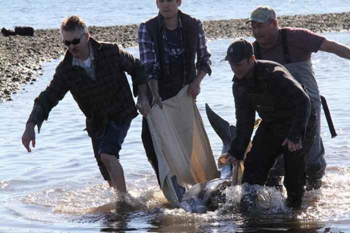 rescate de un delfín varado
