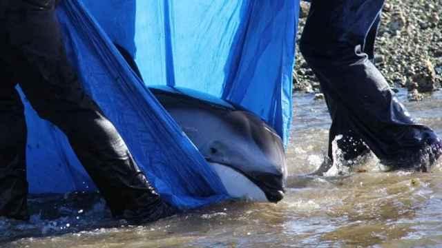 rescate de delfín varado