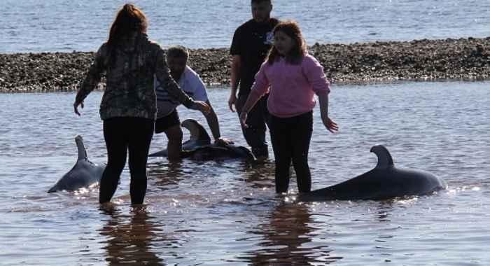 rescate de delfines varados