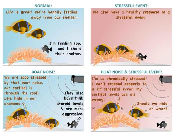 respuesta del pez payaso al ruido de una motora
