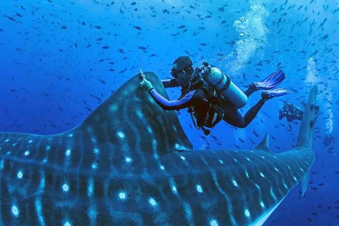 tiburón ballena sonido