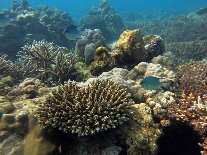 arrecife de coral en Seychelles