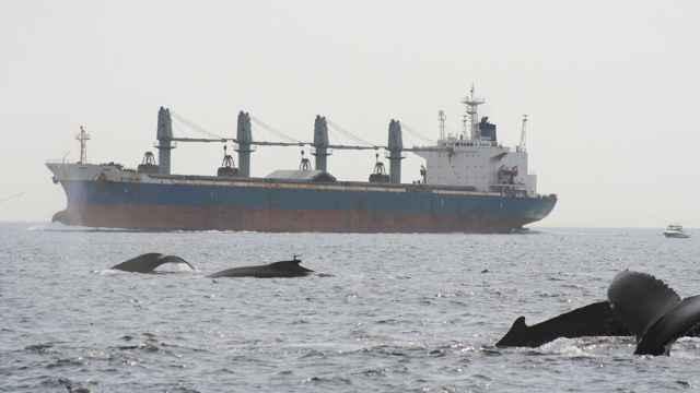 ruido de barcos y ballenas