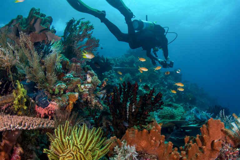 buzo en un arrecife de coral