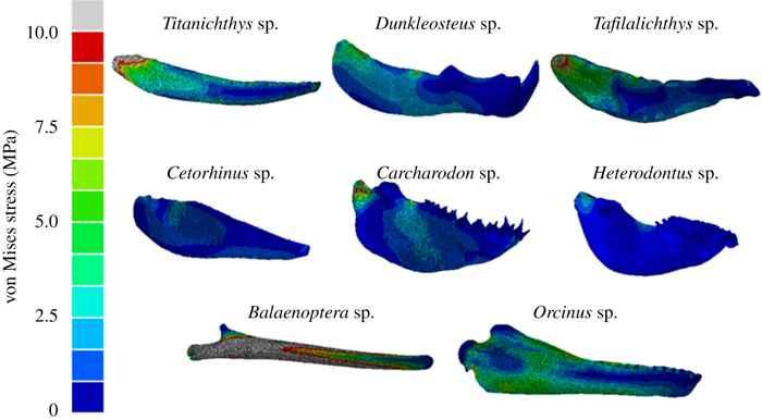 comparación de mandíbulas de peces
