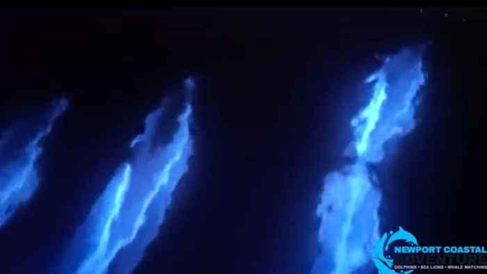 delfines bioluminiscentes