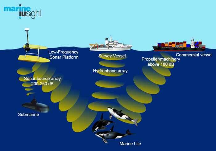 efectos del ruido de los baros en las ballenas