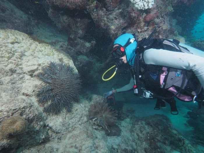 estrella de mar corona de espinas