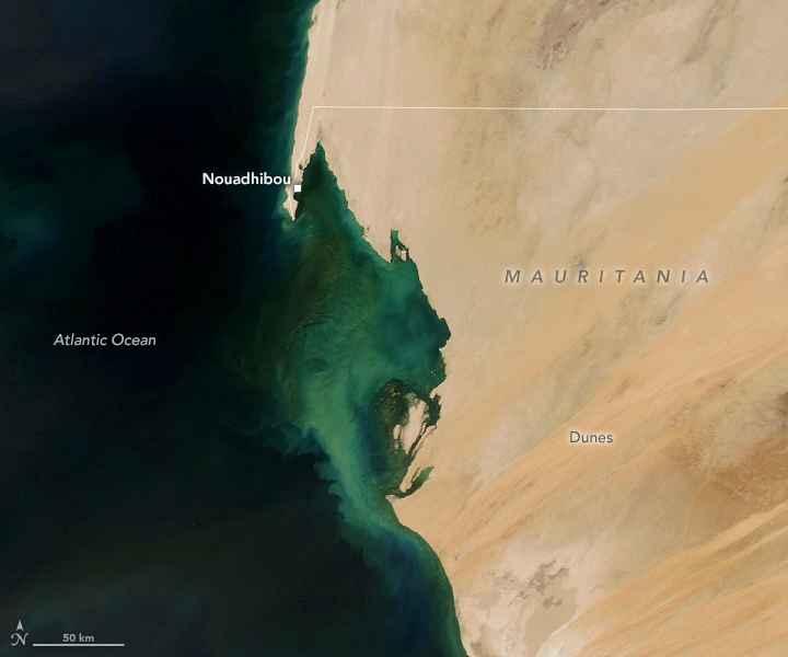 floración de fitoplancton en Mauritania