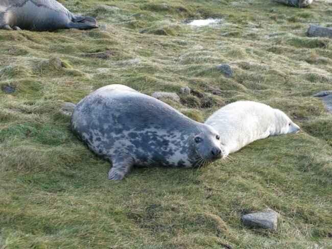 foca madre y su cría