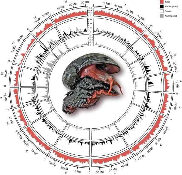 genoma del caracol de pie escamoso