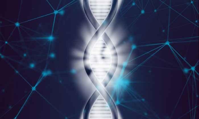 genoma de un metazoo