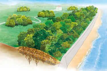 parque de mitigación de tsunamis en Japón