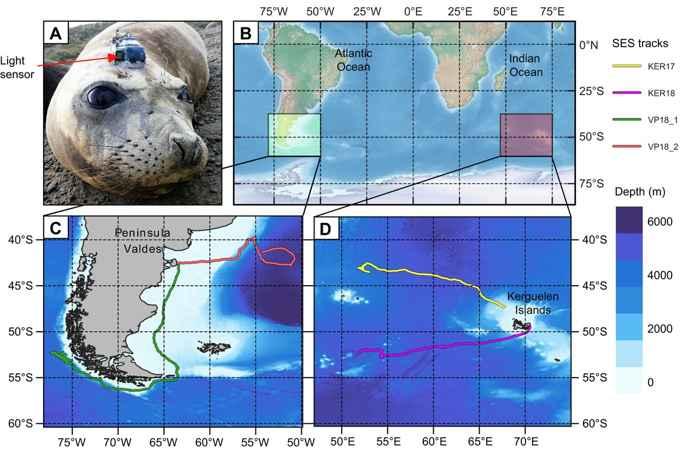 rastreo GPS de focas