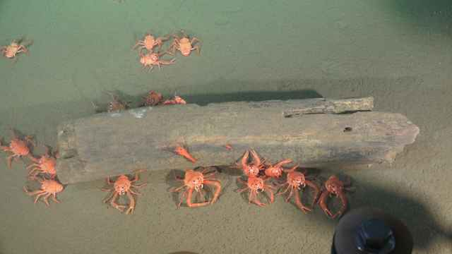 vida en las profundidades del océano