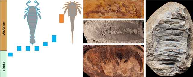 Pterygotidae y Adelophthalmidae