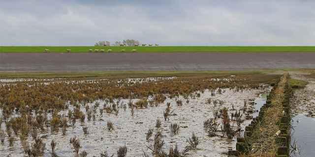 marismas cerca del dique Groningen, Países Bajos