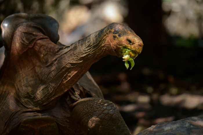 tortuga gigante Diego