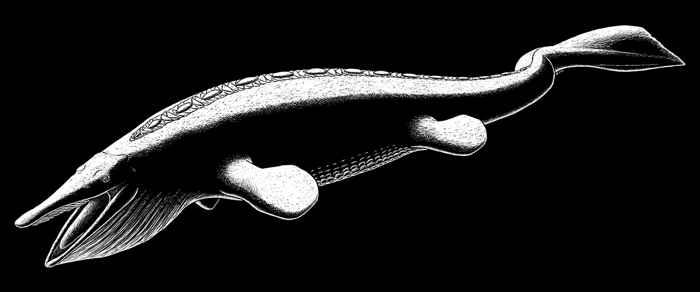 Eretmorhipis carrolldongi