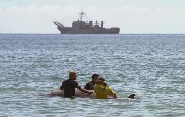 ballena varada a causa del sonar militar