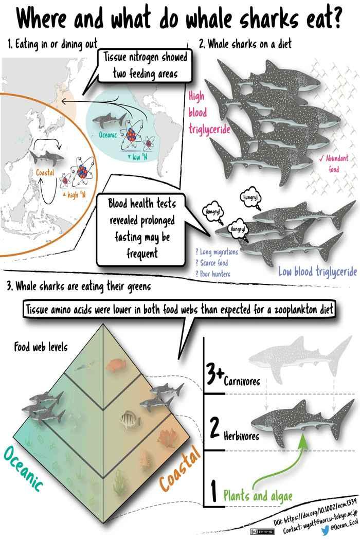 comida del tiburón ballena
