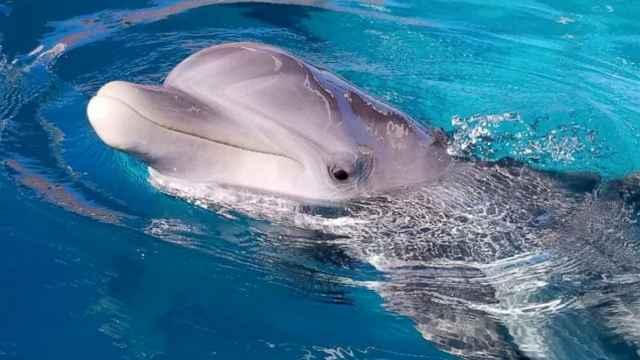 delfín Rimmy