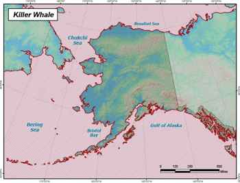 distribución de orcas
