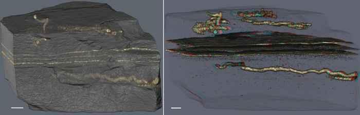 fósiles traza de madrigueras en la roca