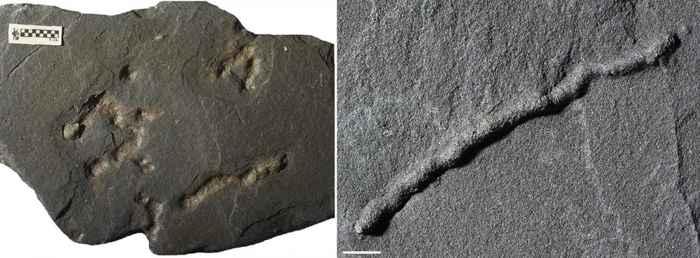 fósiles traza de tubos diminutos
