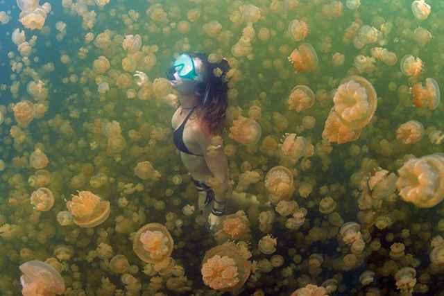 nadadora en el Lago de las Medusas