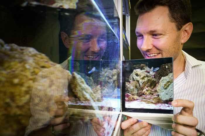 pez limpiador durante la prueba del espejo