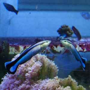 pez durante la prueba del espejo