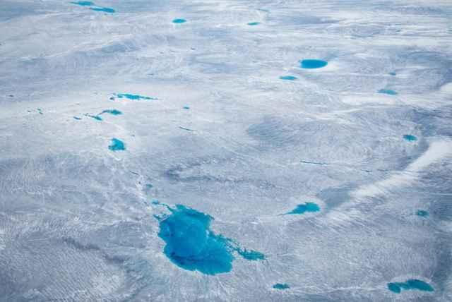 polinias en Groenlandia