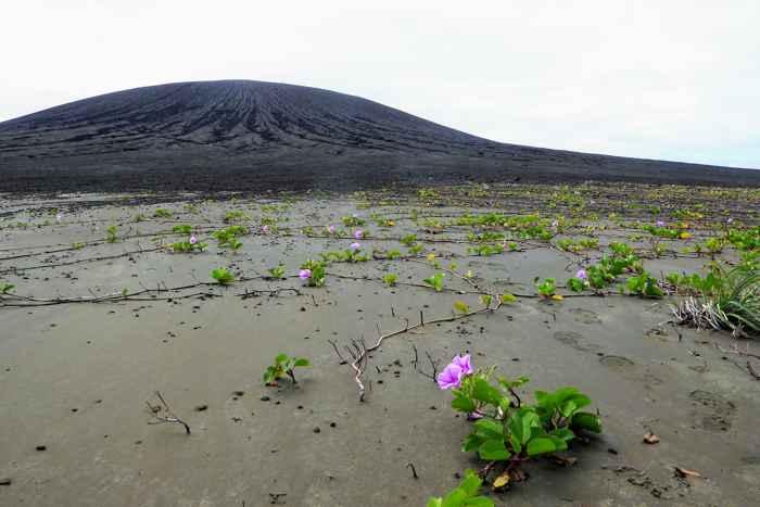 vegetación de la isla Hunga Tonga-Hunga Ha'apai