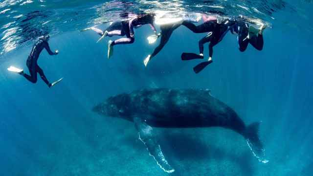 ballena jorobada y nadadores