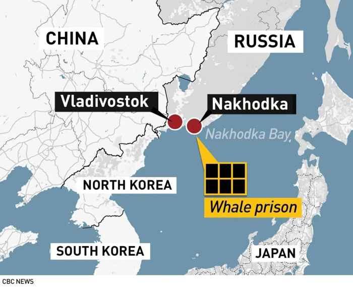 cárcel de ballenas en Rusia